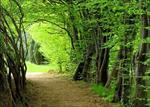 تحقیق اهمیت و نقش جنگل ها