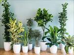 پاورپوینت گیاهان زینتی
