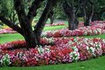 گزارش کارآموزی پرورش و تكثير گل هاي فصلي (گل هاي فضاي آزاد)