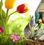 گزارش کارآموزی رشته باغبانی