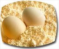 دانلود طرح توجیهی پودر تخم مرغ