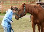پاورپوینت رفتارشناسی اسب
