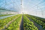 پاورپوینت طرح توجیهی احداث انواع گلخانه